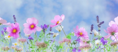 wild-flowers-571940_960_720